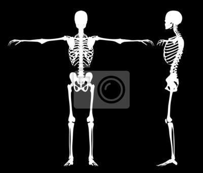 Stehen Skelette