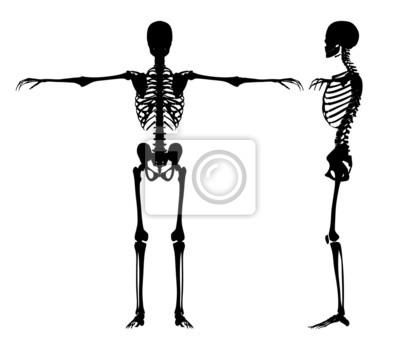 Stehend Skelette