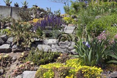 Bild Steingarten, Blumen