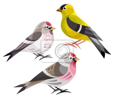 Bild Stilisierte Vögel Finken Amerikanischer Stieglitz Rotschwanzpfeifer