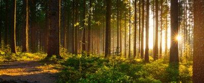 Bild Stiller Wald im Frühling mit schönen hellen Sonnenstrahlen