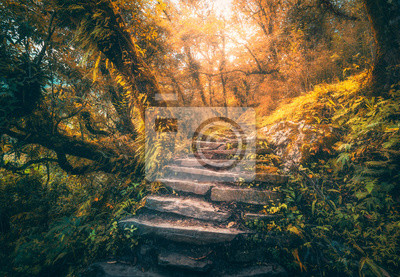Stone steps in beautiful old tropical forest in fog at sunset in autumn. Colorful fall landscape with stone stairs, trees with orange foliage, gold sunlight. Enchanted forest. Beautiful nature. Travel