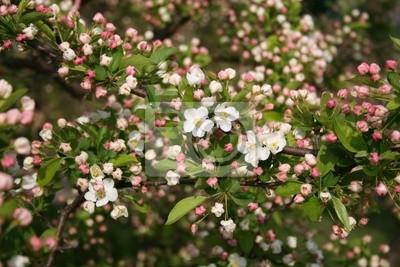 Busch mit rosa blüten