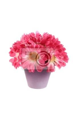 Strauß rosa Gänseblümchen