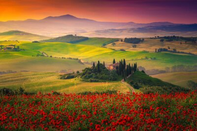 Bild Stunning red poppies blossom on meadows in Tuscany, Pienza, Italy