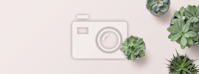 Bild succulents banner or header with different plants on a soft blush / pink background, flat lay / top view, copyspace for your text