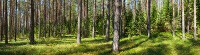 Bild Summer forest panorama