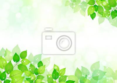 Bild Summer green leaves frame