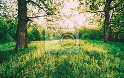 Bild Summer Sunny Deciduous Forest Trees And Green Grass. Nature, Woods in Sunlight
