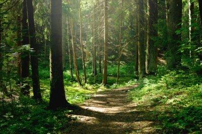 Bild Summer sunny forest