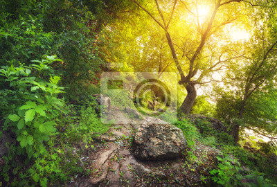 Summer sunset in the beautiful forest