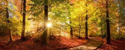 Bild Sunlit path in a park before sunset