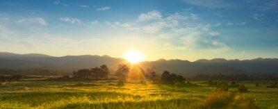 Bild  Sunset over vast blossoming meadow landscape