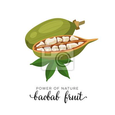Superfood Frucht Baobab Frucht Vektor Illustration Cartoon