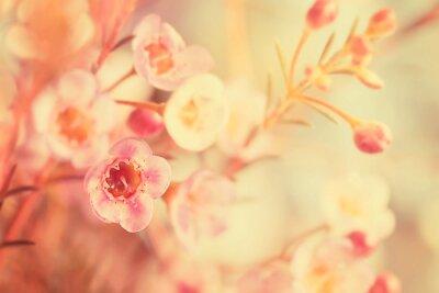 Bild Süße Ton- und Weichzeichnerblume