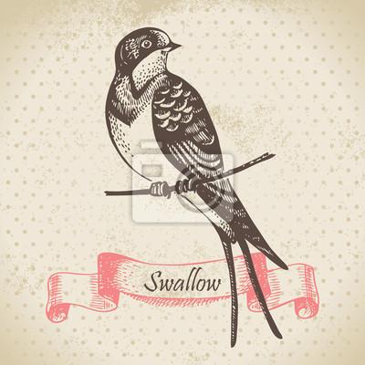 Swallow Vogel, von Hand gezeichnete Illustration
