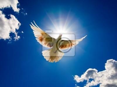 Bild Taube fliegen