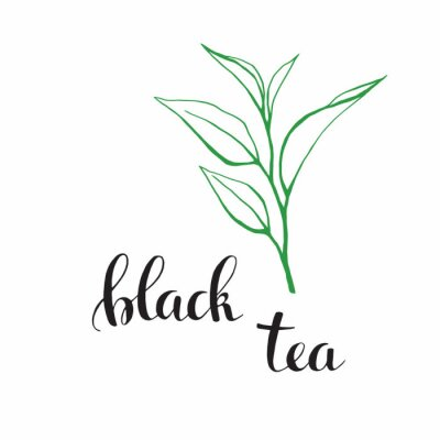 Bild Tea leaves with letters as design elements. Sketch black and white isolated on white background. Hand whiting letters 3.