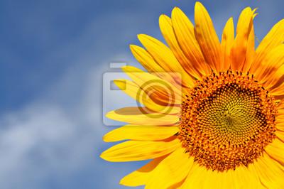 Teil des schönen Sonnenblumen mit blauem Himmel