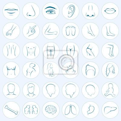 Teile des menschlichen körpers, die fünf sinne, organe, medizinische ...