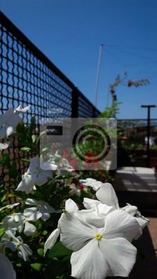Terrazzo in fiore leinwandbilder • bilder Terrasse, Balkon ...