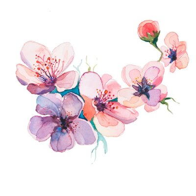 Bild the spring flowers watercolors isolated on the white background
