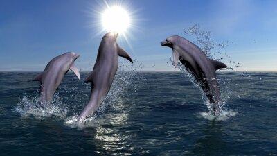 Bild Three dolphins