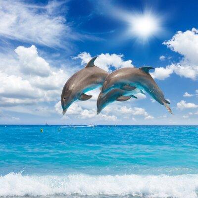 Bild three  jumping dolphins