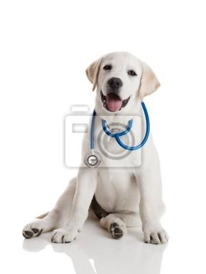 Tierarzt Hund