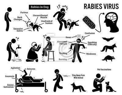 Tollwut-virus in menschlichen und tierischen strichmännchen ...
