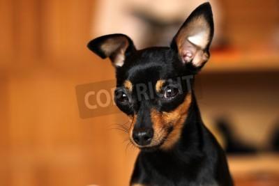 Bild Tollwütiger Hund
