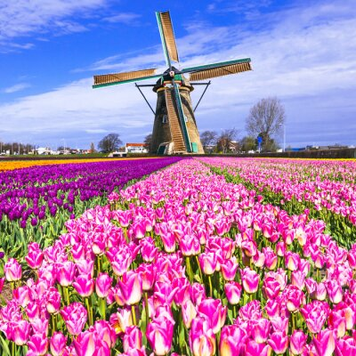 Bild Traditionellen Holland Landschaft - Windmühlen und Tulpen
