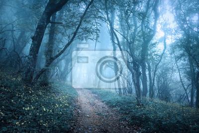 Trail durch eine geheimnisvolle dunkle Wald im Nebel
