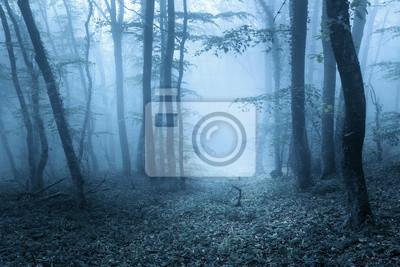 Trail durch einen geheimnisvollen dunklen Wald im Frühjahr