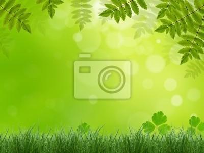 Bild Träumerische Frühlingswiese