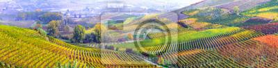 Bild Traumhafte Weinrebe in der piemontesischen Weinregion Italiens
