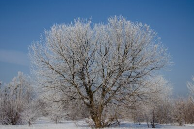 Bild tree in winter
