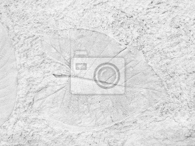Bild Tree leaf of tropical plant in printed on concrete surface for background