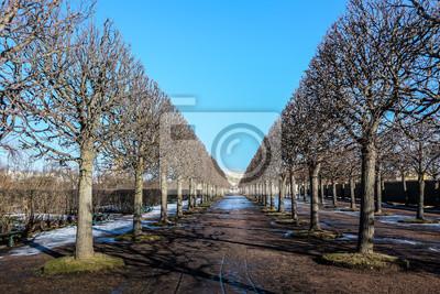 Bild Tree on the way