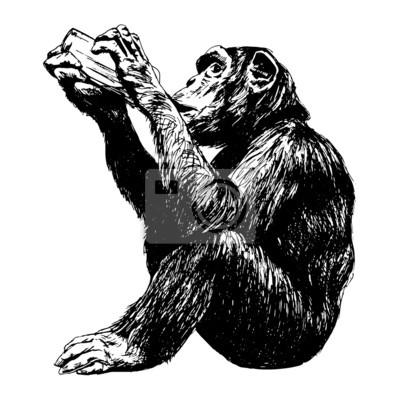 Trinker Schimpansen - Vektor-Illustration