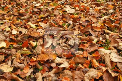 Trockene Blätter im Herbst