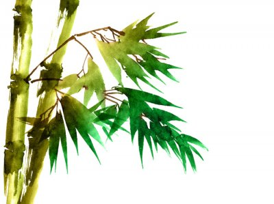 Bild Tropical bamboo with leaves