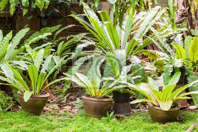 Tropical Farn Pflanze Im Garten Leinwandbilder Bilder Fern