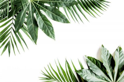 Bild Tropical palm leaves Aralia isolated on white background. Tropical nature concept.