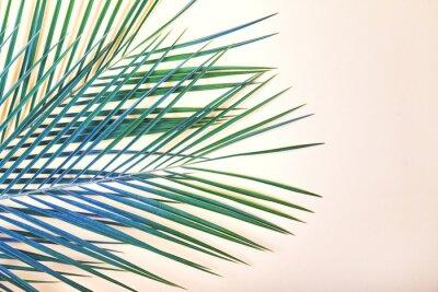 Bild Tropische Blätter auf pastellrosa Hintergrund.