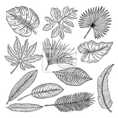 Leinwandbild Kunst-Druck 100x50 Bilder Blumen Pflanzen Tropische Blätter