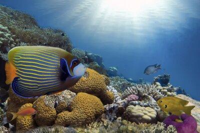 Bild Tropische Fische auf Korallenriff