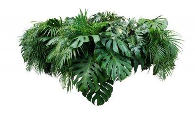 Bild Tropischer Blattlaubbetriebsdschungelbuschblumenanordnungs-Naturhintergrund lokalisiert auf weißem Hintergrund, Beschneidungspfad eingeschlossen.