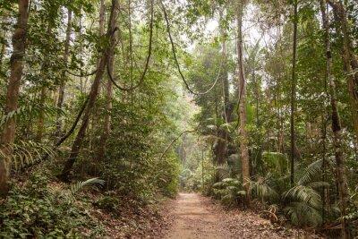 Bild Tropischer Regenwald