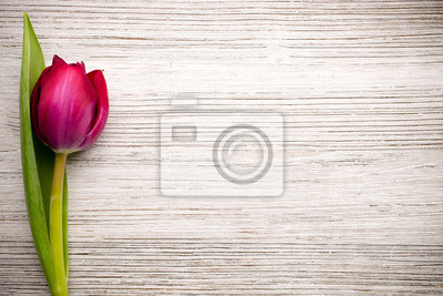 Bild Tulip.